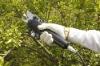 electric pruning shears,garden pruning shears,tree pruning shears,pruning shears for grape